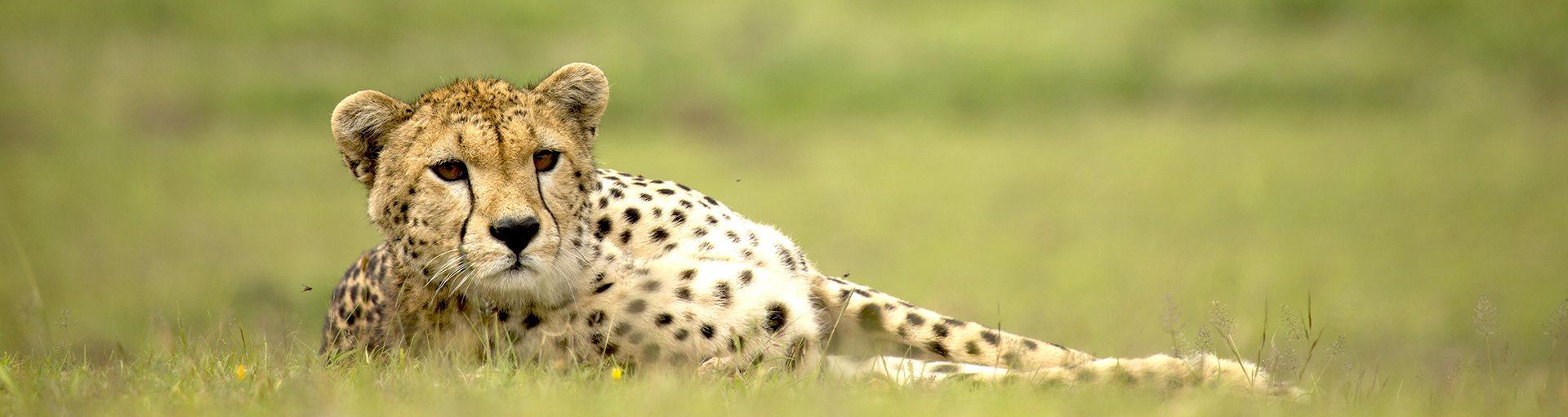 Serengeti @ John Moller