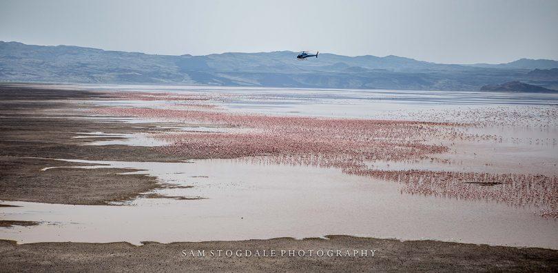 Flamingo on Lake Logipi, Northern Kenya