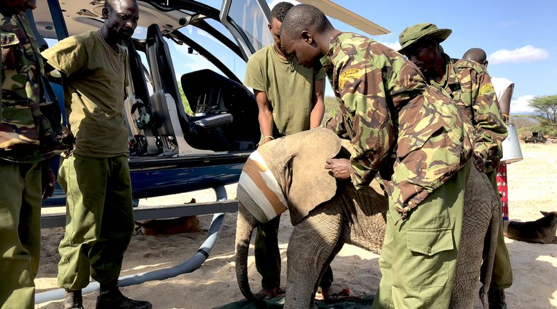 Orphan Elephant rescue by helicopter