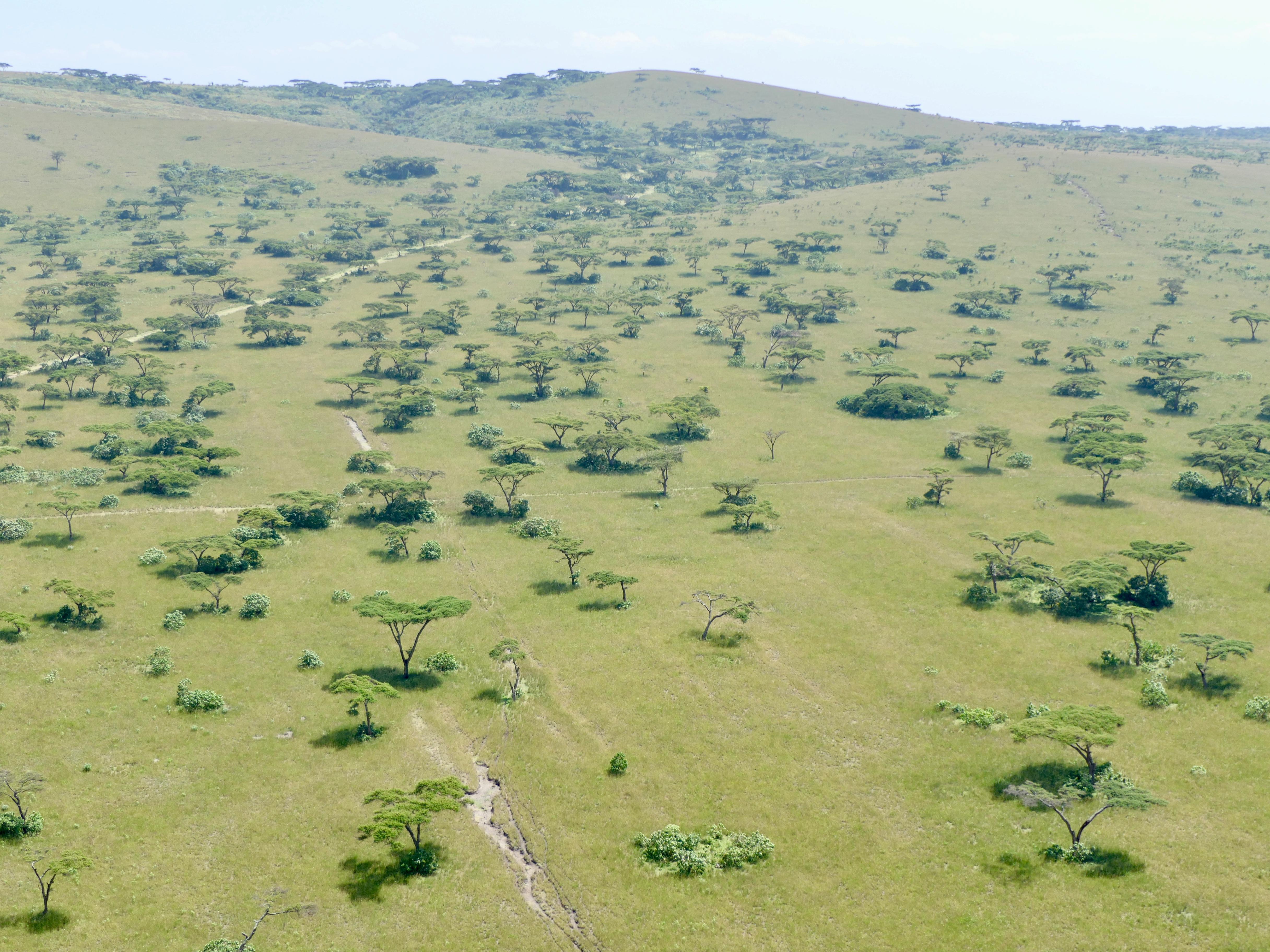Swayne's Hartebeest Sanctuary, Ethiopia