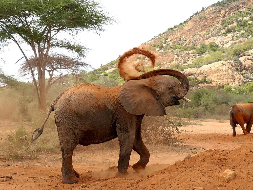 Red elephants of Tsavo